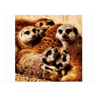 Familie von Meerkats Postkarte