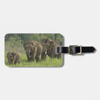 Familienherauskommen des indischen Elefanten Kofferanhängern