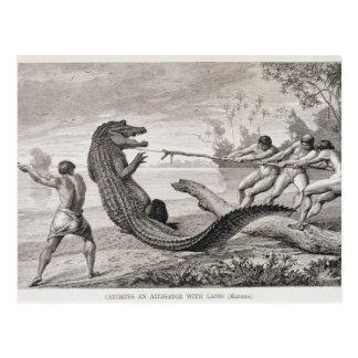 Fangen eines Alligators mit Lasso Postkarte