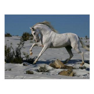 Fantasie-Pferde: Schnee-König Postkarte