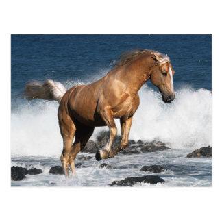 Fantasie-Pferde: Sommer-Spritzen Postkarte