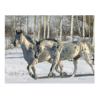 Fantasie-Pferde: Winter-Märchenland Postkarte