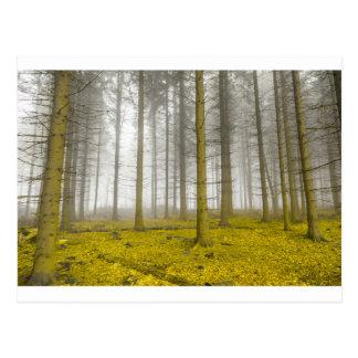 Fantasiewald mit Nebel und gelbem Laub Postkarten