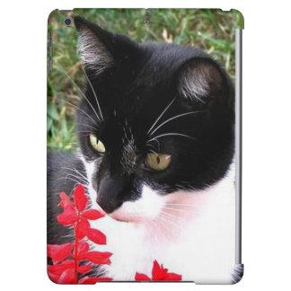 Fantastische Tuxedo-Katze im Garten