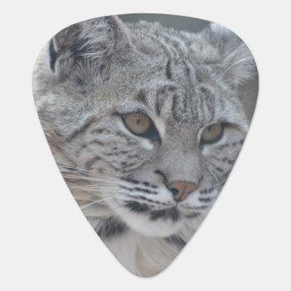 Fantastischer Bobcat Plektrum