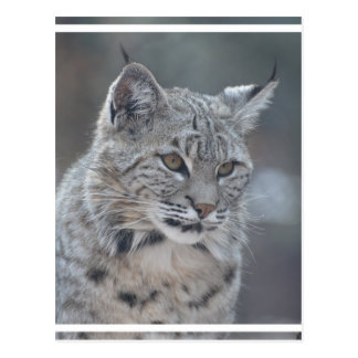 Fantastischer Bobcat Postkarte