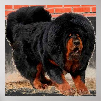 Fantastischer tibetanischer Mastiff Posterdrucke