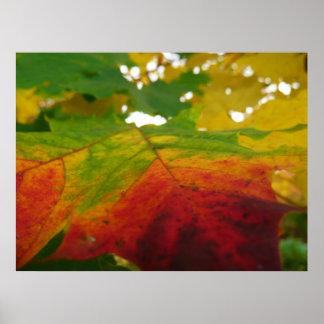 Farben der Ahornblatt-Herbst-Natur-Fotografie Poster