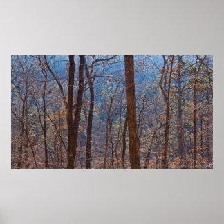 Farben im Winter-Wald am Dämmerungs-Plakat Poster
