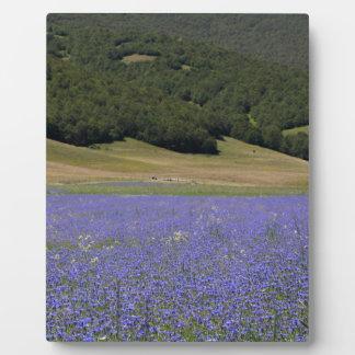 Farbfelds des Blaus mit Cornflowers Fotoplatte