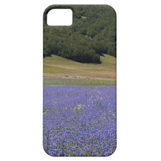 Farbfelds des Blaus mit Cornflowers iPhone 5 Hüllen