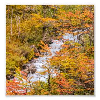 Farbige Waldlandschaftsszene, Patagonia Fotodruck
