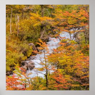 Farbige Waldlandschaftsszene, Patagonia Poster