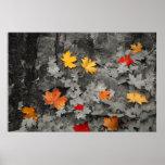 Farbiges Blätter in einem Schwarzweiss-Weltplakat Posterdrucke