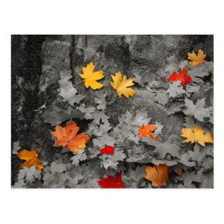 Farbiges Blätter in einer Postkarte