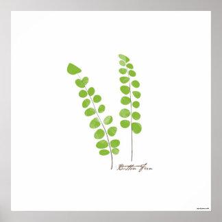 Farn-botanischer Druck der Poster