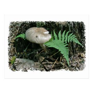 Farn u. Pilz an Stumpf-koordiniereneinzelteilen Postkarte