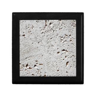 Farn-versteinerte Fliesen-Oberflächen-Nahaufnahme Erinnerungskiste