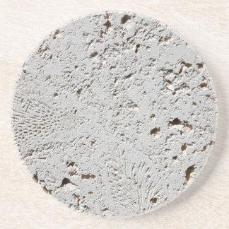 Farn-versteinerte Fliesen-Oberflächen-Nahaufnahme Getränkeuntersetzer