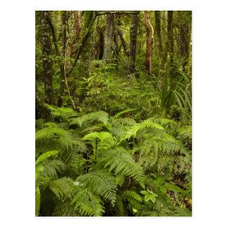 Farne und gebürtiger Busch nahe Matai fällt, Postkarte
