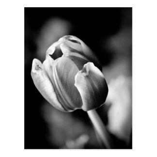 Faszinierendes Tulpe-Foto macht eine emotionale Ka Postkarten