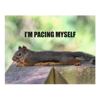 Faules Eichhörnchen-Foto