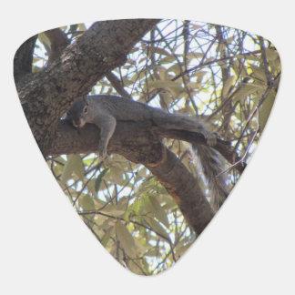Faules Felsen-Eichhörnchen Plektron