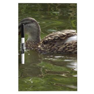 Fav wenig duckie memoboard