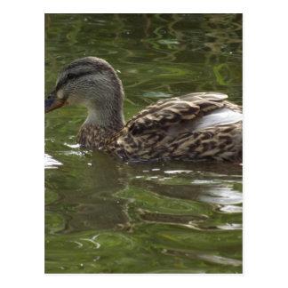 Fav wenig duckie postkarte