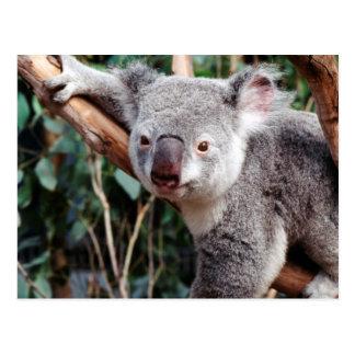 Featherdale Tier-Park, Koala-Bären Postkarte