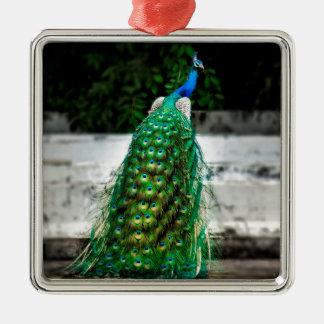 Feder-Kunstfarben des Pfaus schöne Silbernes Ornament