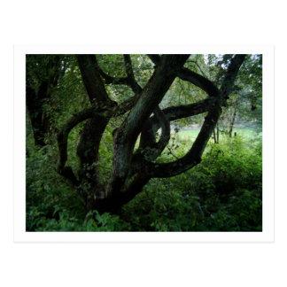 Feenhafter Baum Postkarte