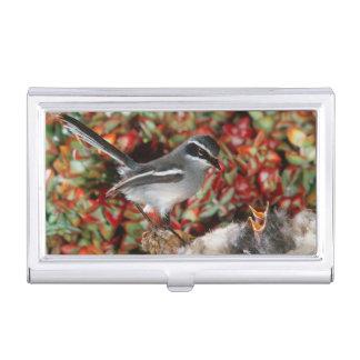 Feenhafter Flycatcher (Stenostira Scita) mit Küken Visitenkarten Dose