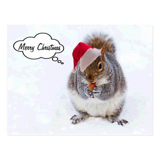Feiertags-Eichhörnchen Postkarten