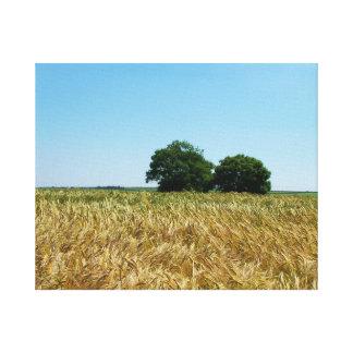 Feld der Gerste in Cornwall-Fotografie Leinwanddruck