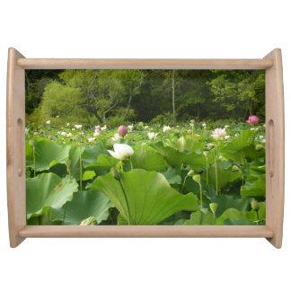Feld der Lotos-Blumen Tablett