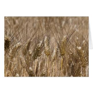 Feld der Ohren des Weizens Karte