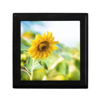 Feld der Sonnenblumen Erinnerungskiste
