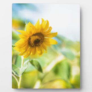 Feld der Sonnenblumen Fotoplatte