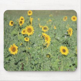 Feld der Sonnenblumen Mauspad