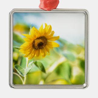 Feld der Sonnenblumen Quadratisches Silberfarbenes Ornament