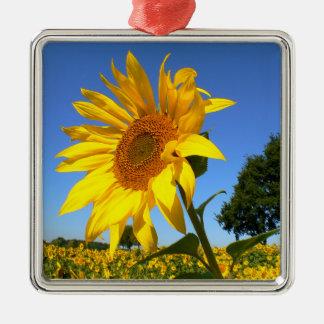 Feld der Sonnenblumen, Sonnenblume Quadratisches Silberfarbenes Ornament
