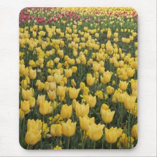 Feld der Tulpen Mauspad