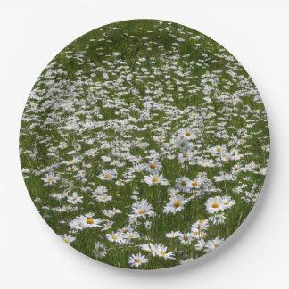 Feld des Gänseblümchen-Natur-Fotos Pappteller