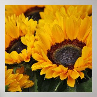 Feld des goldenen Sonnenblume-Druckes Poster