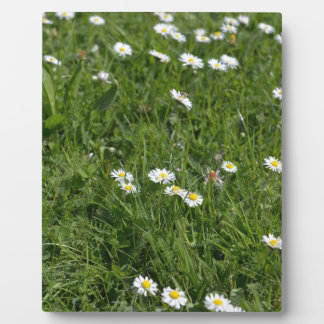 Feld des grünen Grases mit den weißen und gelben Fotoplatte