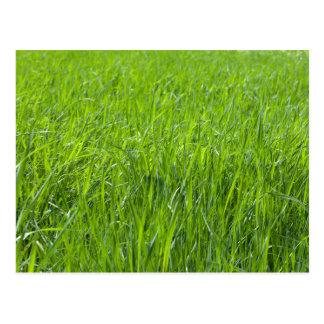 Feld des grünen Grases Postkarte