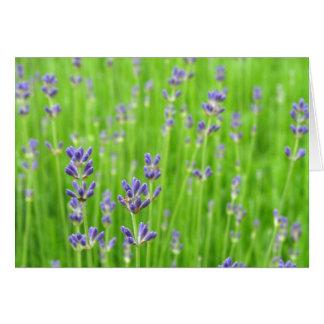Feld des Lavendels danken Ihnen Mitteilungskarte