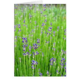 Feld des Lavendels Grußkarten