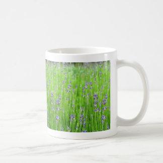 Feld des Lavendels Kaffeetasse